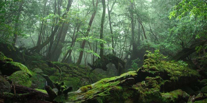 rừng thiên nhiên